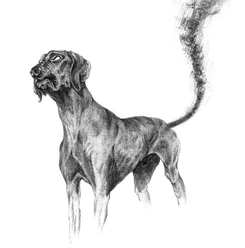 4. Un chien à longue queue rôde au tour de Plouaret