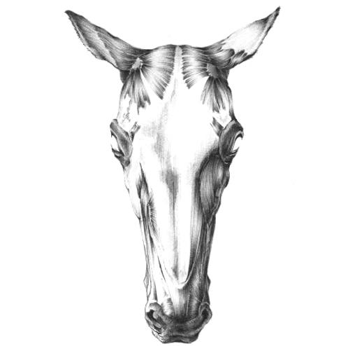 7. Le beau cheval du chemin creux de Melchonnec